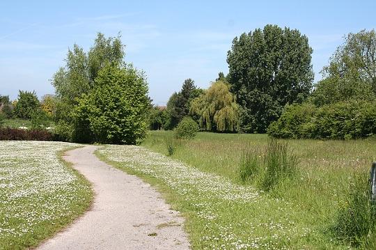 manfaat jalan kaki di siang hari untuk kesehatan jantung