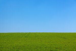 manfaat jalan kaki di atas rumput hijau nan segar