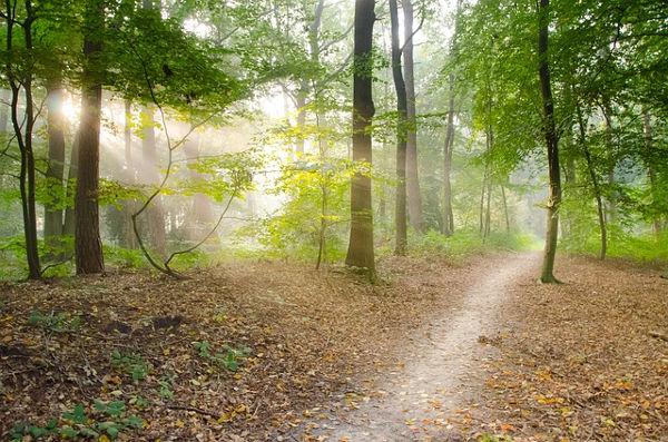 manfaat jalan kaki 30 menit pagi hari